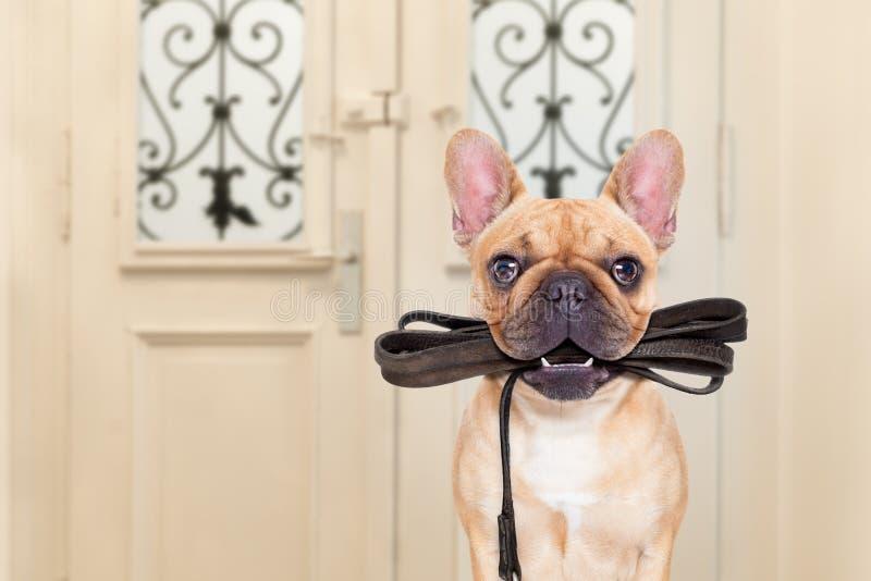 Περίπατος λουριών σκυλιών στοκ εικόνα με δικαίωμα ελεύθερης χρήσης
