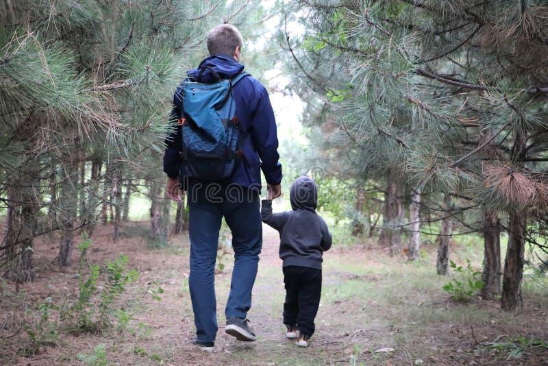 Περίπατος πατέρων και γιων στο κωνοφόρο δάσος μεταξύ των πεύκων Η έννοια των οικογενειακών αξιών, πεζοπορώ στοκ φωτογραφία