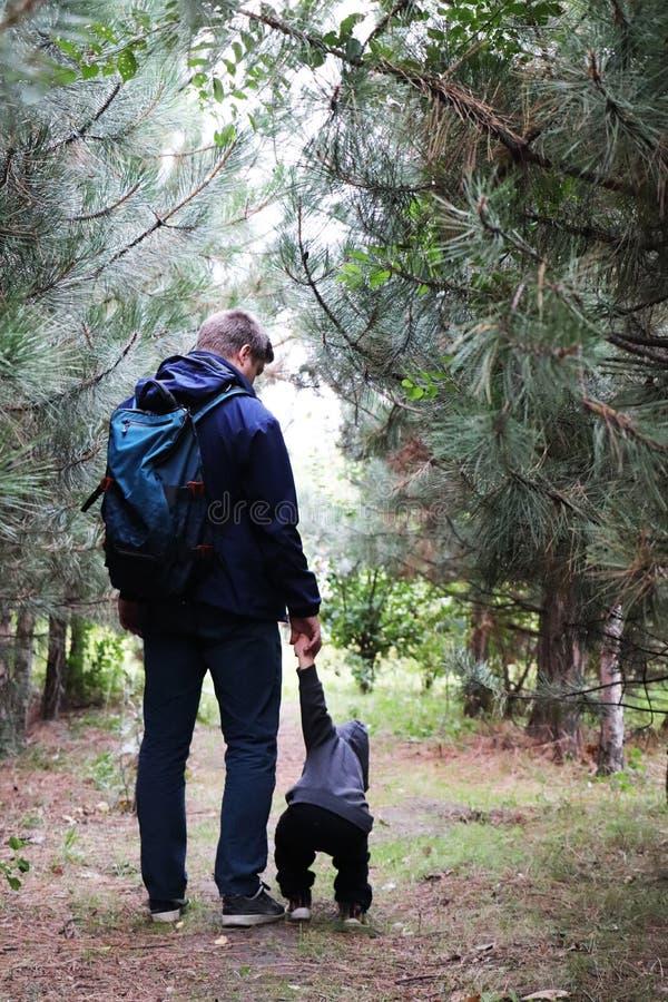 Περίπατος πατέρων και γιων στο κωνοφόρο δάσος μεταξύ των πεύκων Η έννοια των οικογενειακών αξιών, πεζοπορώ στοκ εικόνα