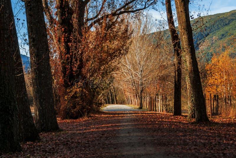Περίπατος στα ξύλα Φθινόπωρο σε RascafrÃa, Μαδρίτη, Ισπανία στοκ εικόνες