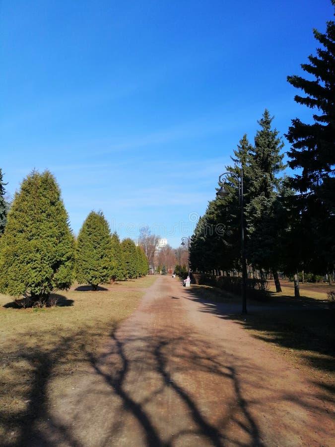 Περίπατος στο πάρκο μεταξύ των δέντρων στοκ φωτογραφίες με δικαίωμα ελεύθερης χρήσης