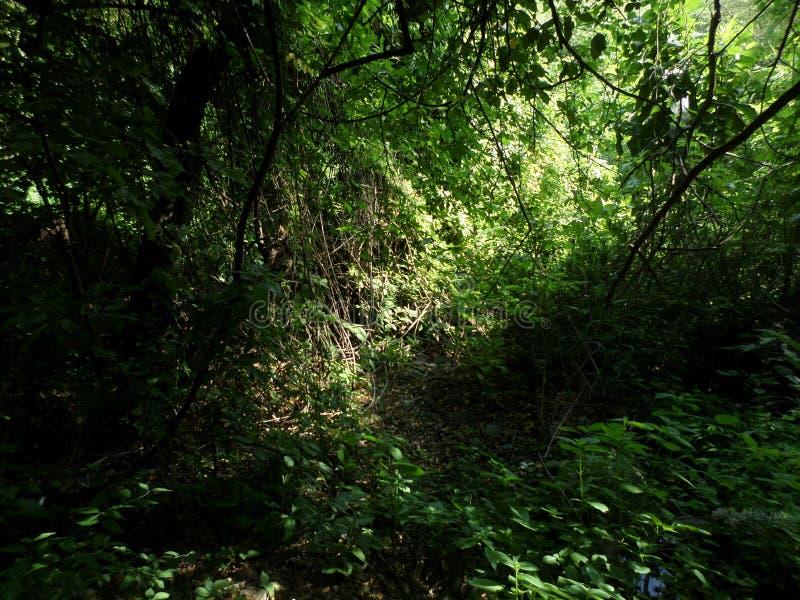 Περίπατος στο τροπικό δάσος στοκ εικόνα με δικαίωμα ελεύθερης χρήσης