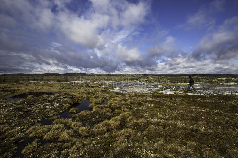 Περίπατος tundra στοκ φωτογραφία με δικαίωμα ελεύθερης χρήσης