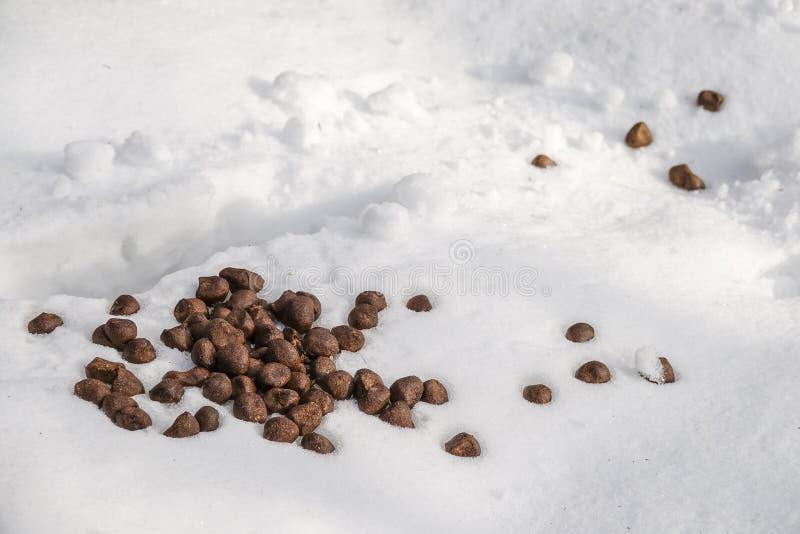 Περίττωμα/περιττώματα στο χιόνι από άλκες/μια άλκη στοκ εικόνες