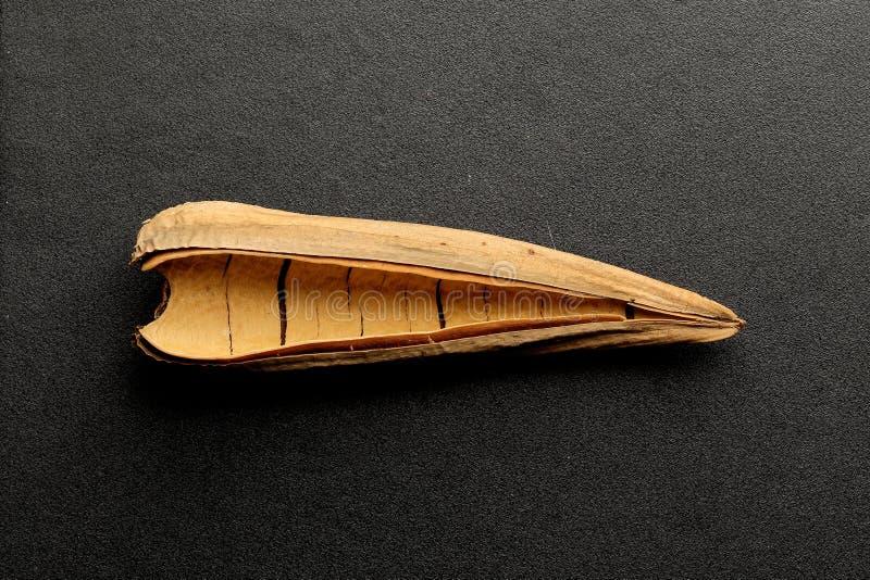 Περίληψη ενός ξηρού φύλλου ενός φυτού στοκ φωτογραφία με δικαίωμα ελεύθερης χρήσης