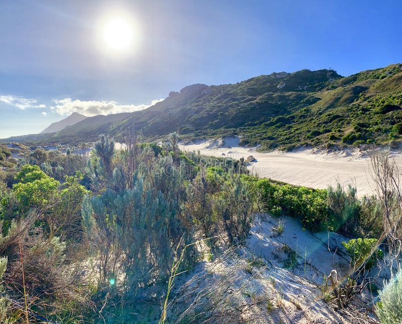 Περιβάλλον αμμόλοφων άμμου στο δυτικό ακρωτήριο Νότια Αφρική στοκ φωτογραφία