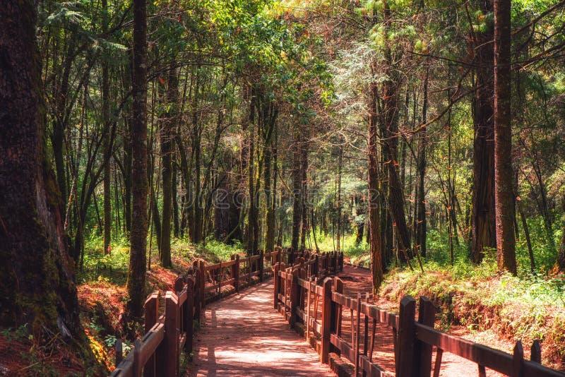 Περιβαλλοντικά προστατευόμενη περιοχή βιόσφαιρας πεταλούδων μοναρχών στοκ εικόνα