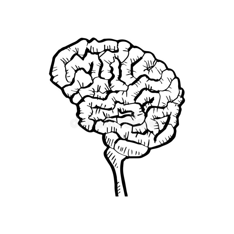 Περιγραμματικός του ανθρώπινου εγκεφάλου ελεύθερη απεικόνιση δικαιώματος