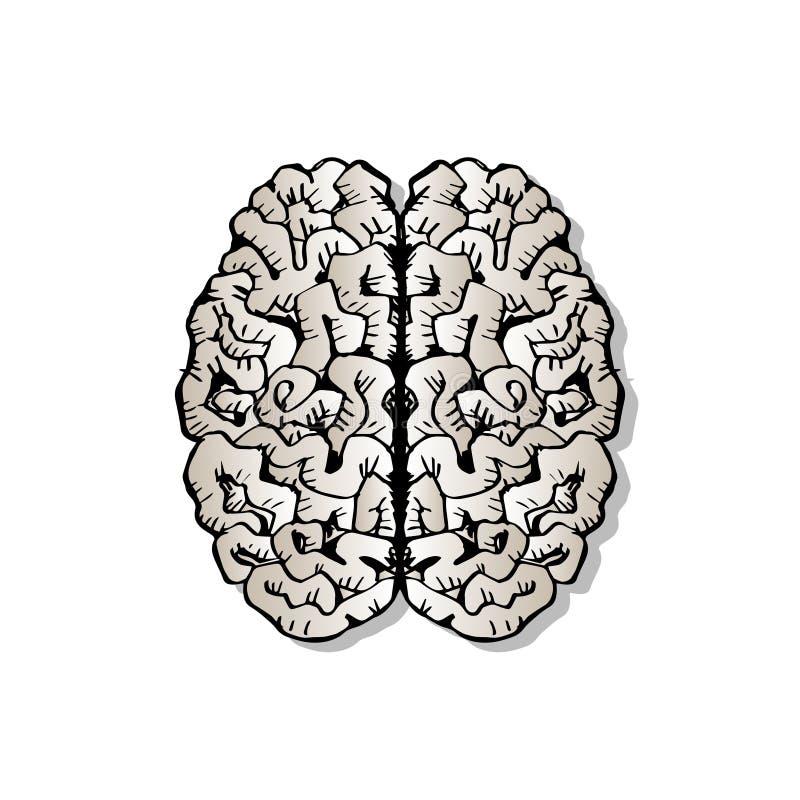 Περιγραμματικός του ανθρώπινου εγκεφάλου διανυσματική απεικόνιση