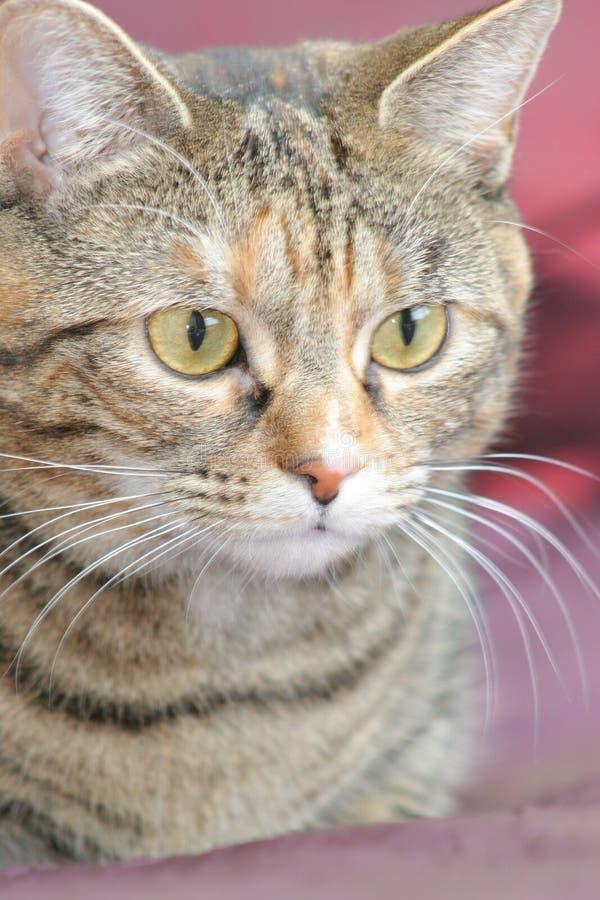 περιεκτικότητα σε γάτες στοκ εικόνα