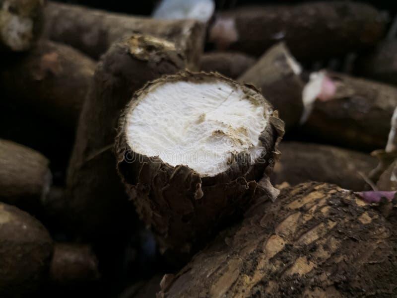 Περικοπή ή φέτα μιας ρίζας Manihot esculenta ή της μανιόκας, της ταπιόκας, του yucca ή της μανιόκας στοκ εικόνες με δικαίωμα ελεύθερης χρήσης