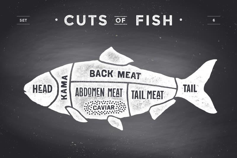 Περικοπή του συνόλου κρέατος Διάγραμμα και σχέδιο χασάπηδων αφισών - ψάρια διανυσματική απεικόνιση