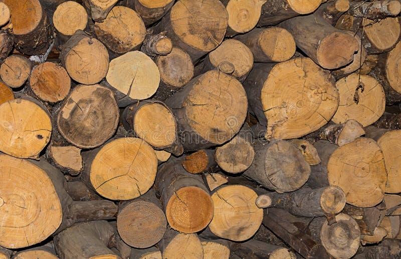 Περιορίζω κούτσουρο abunch φυσικό υπόβαθρο κινηματογραφήσεων σε πρώτο πλάνο δέντρων αριθμού στοκ φωτογραφία
