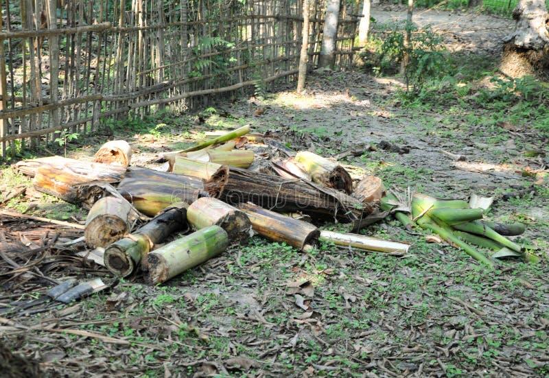 Περιορίστε τα κομμάτια ενός δέντρου μπανανών για την οικιακή χρήση που είδε σε ένα χωριό στοκ εικόνα