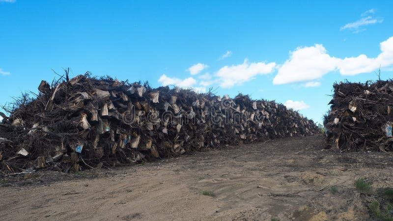 Περιορίστε το δέντρο στη Φινλανδία στοκ φωτογραφία με δικαίωμα ελεύθερης χρήσης