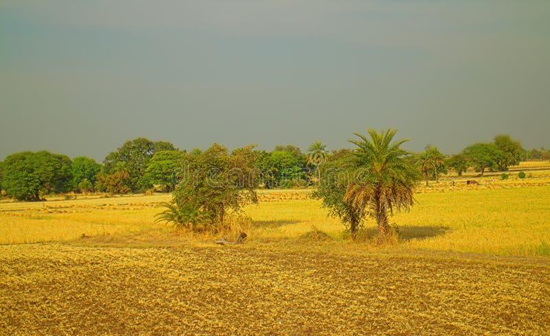 Περιοχή γύρω από το Νάγκπορ, Ινδία Ξηροί λόφοι με τους κήπους αγροτών οπωρώνων στοκ φωτογραφίες