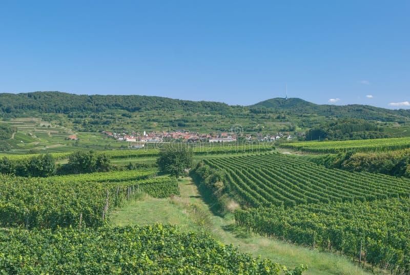 Περιοχή κρασιού Kaiserstuhl, μαύρο δάσος, Γερμανία στοκ εικόνα με δικαίωμα ελεύθερης χρήσης