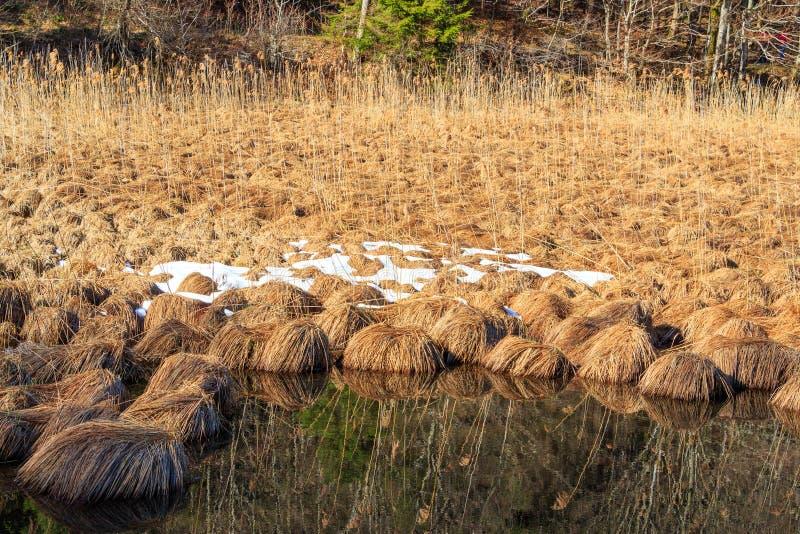 Περιοχή συντήρησης λιμνών Alpsee με τους καλάμους και τη βιασύνη στοκ εικόνα