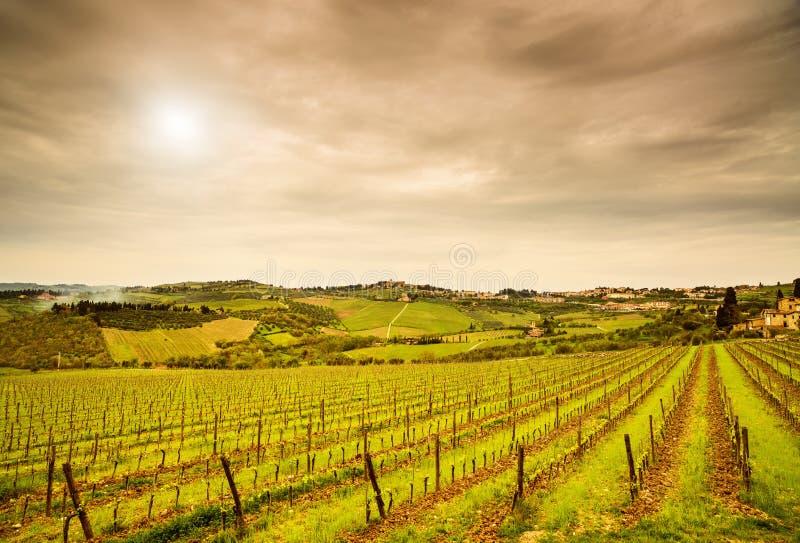 Περιοχή Chianti, αμπελώνας Panzano, δέντρα και αγρόκτημα στο ηλιοβασίλεμα. Tusc στοκ φωτογραφία με δικαίωμα ελεύθερης χρήσης