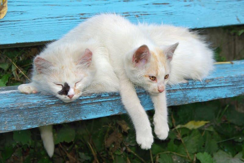 Περιπλανώμενες γάτες. στοκ εικόνες με δικαίωμα ελεύθερης χρήσης