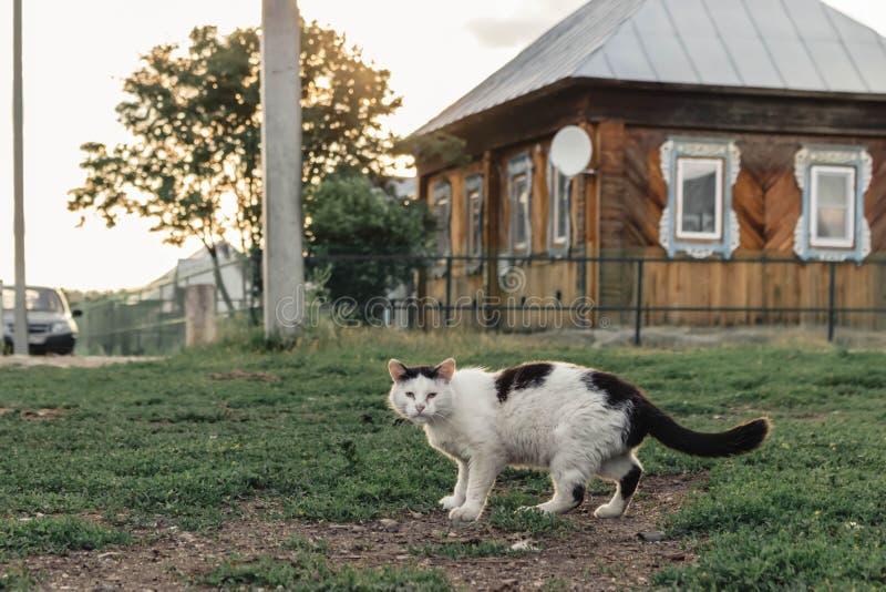 Περιπλανώμενη γάτα πιπεροριζών που περπατά κάτω από το δρόμο στο υπόβαθρο ενός του χωριού σπιτιού στοκ εικόνα με δικαίωμα ελεύθερης χρήσης