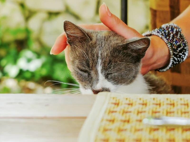Περιπλανώμενη γάτα που ζητά τα τρόφιμα και την προσοχή στοκ εικόνες