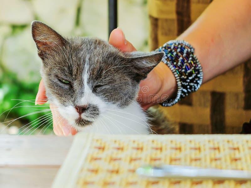 Περιπλανώμενη γάτα που ζητά τα τρόφιμα και την προσοχή στοκ εικόνες με δικαίωμα ελεύθερης χρήσης