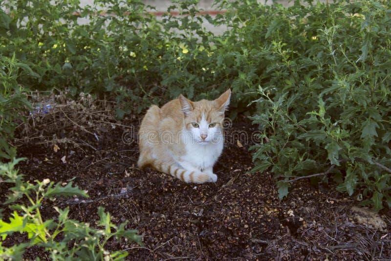 Περιπλανώμενη γάτα υπαίθρια Χαριτωμένη γάτα στο δρόμο στοκ φωτογραφία με δικαίωμα ελεύθερης χρήσης