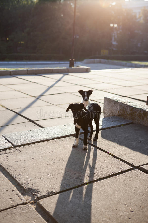 Περιπλανώμενο κουτάβι δύο το πρωί στην ηλιόλουστη πόλη στοκ εικόνα με δικαίωμα ελεύθερης χρήσης