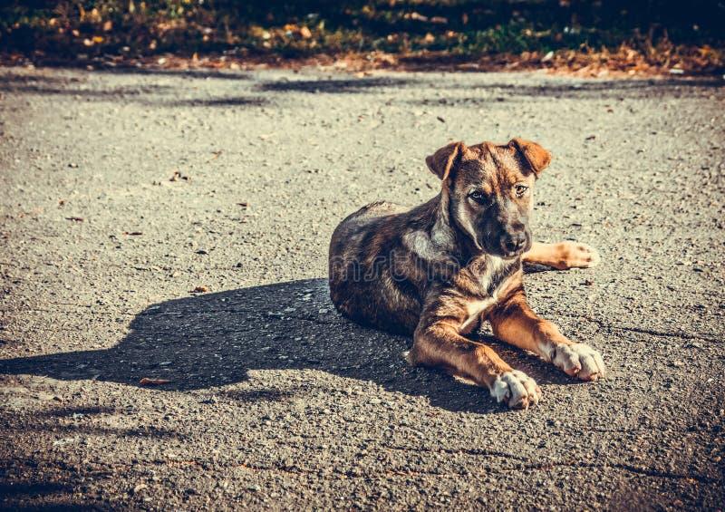 Περιπλανώμενο νέο σκυλί που βρίσκεται σε έναν δρόμο και που εξετάζει τη κάμερα στοκ φωτογραφίες