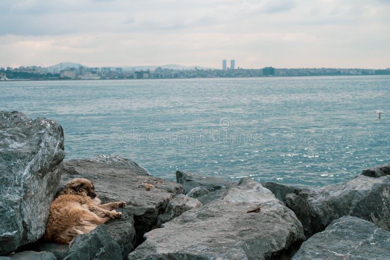 Περιπλανώμενο σκυλί με τον καφετή καθορισμό και το αίσθημα λυπημένος και μόνος στο Βόσπορο μια νεφελώδη ημέρα στοκ φωτογραφίες με δικαίωμα ελεύθερης χρήσης