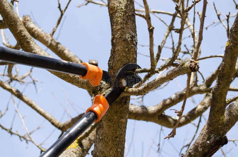Περιποίηση δύο οπωρωφόρων δέντρων κήπος άνοιξη κουρευτών ζώων λαβών στοκ εικόνα με δικαίωμα ελεύθερης χρήσης