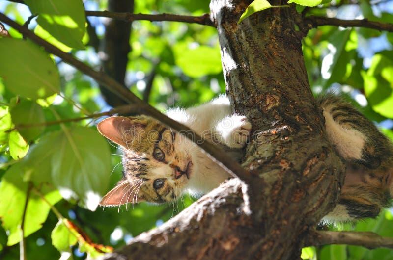 Περιπλανώμενη γάτα που κολλιέται στο δέντρο στοκ εικόνα με δικαίωμα ελεύθερης χρήσης