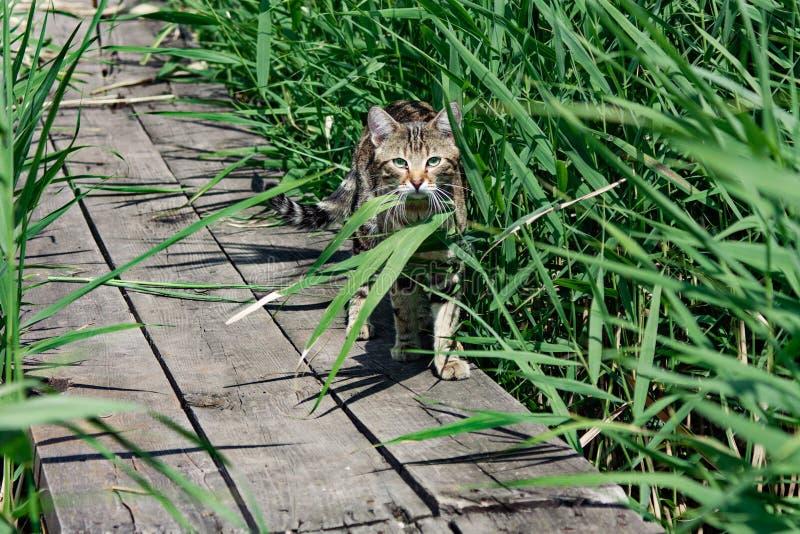 Περιπλανώμενη γάτα στη βιασύνη στη γέφυρα στοκ φωτογραφία
