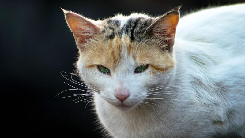Περιπλανώμενη γάτα στοκ εικόνα με δικαίωμα ελεύθερης χρήσης