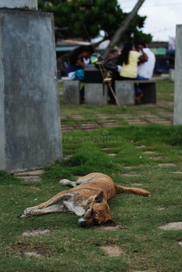 Περιπλανώμενο σκυλί σε Matana, Σρι Λάνκα στοκ φωτογραφία με δικαίωμα ελεύθερης χρήσης