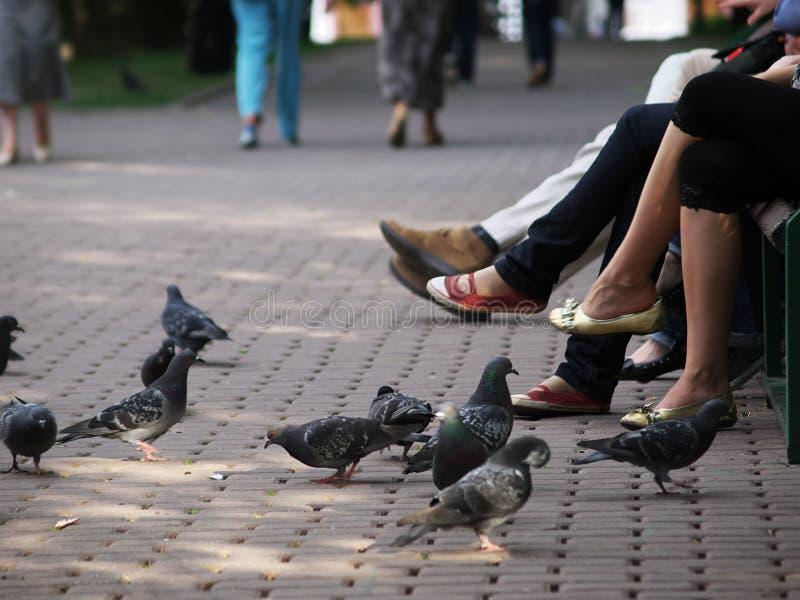 περιστέρια ποδιών στοκ φωτογραφία με δικαίωμα ελεύθερης χρήσης