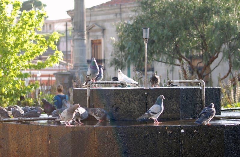 Περιστέρια σε ένα fontaine ι Λα Αντίγκουα Γουατεμάλα στοκ φωτογραφίες με δικαίωμα ελεύθερης χρήσης