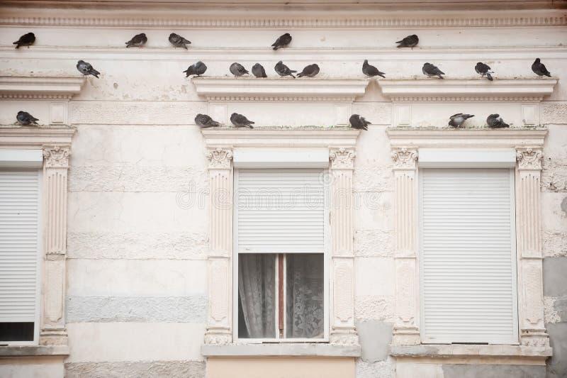 Περιστέρια σε μια πρόσοψη οικοδόμησης στοκ φωτογραφία