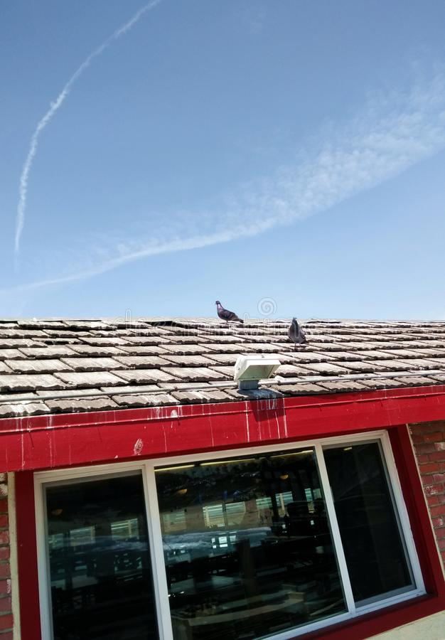 Περιστέρια στη στέγη στο κόκκινο σπίτι στοκ φωτογραφία με δικαίωμα ελεύθερης χρήσης