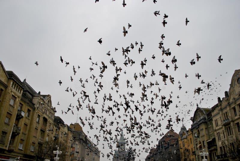 Περιστέρια Flyibg στοκ φωτογραφία με δικαίωμα ελεύθερης χρήσης
