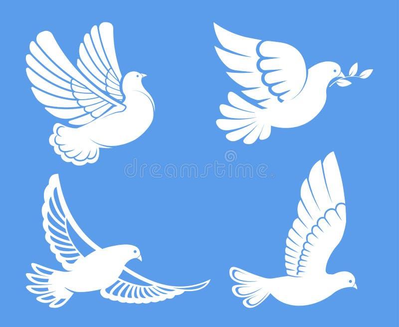 Περιστέρι ή περιστέρι, άσπρο πουλί που πετούν με τα φτερά στον ουρανό ή σύνολο καθίσματος απεικόνιση αποθεμάτων