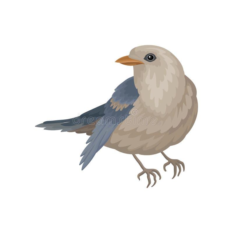 Περιστέρι με το μπλε-γκρίζο φτέρωμα Χειμερινό πουλί με τα μικρά επικεφαλής και κοντά πόδια Άγριο επενδυμένο με φτερά ζώο Επίπεδο  ελεύθερη απεικόνιση δικαιώματος