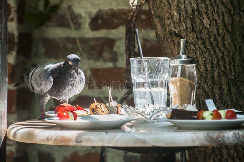 Περιστέρι που τρώει τα τρόφιμα από τον πίνακα εστιατορίων στοκ εικόνα με δικαίωμα ελεύθερης χρήσης