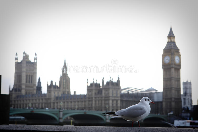 περιστέρι του Λονδίνου στοκ εικόνες με δικαίωμα ελεύθερης χρήσης