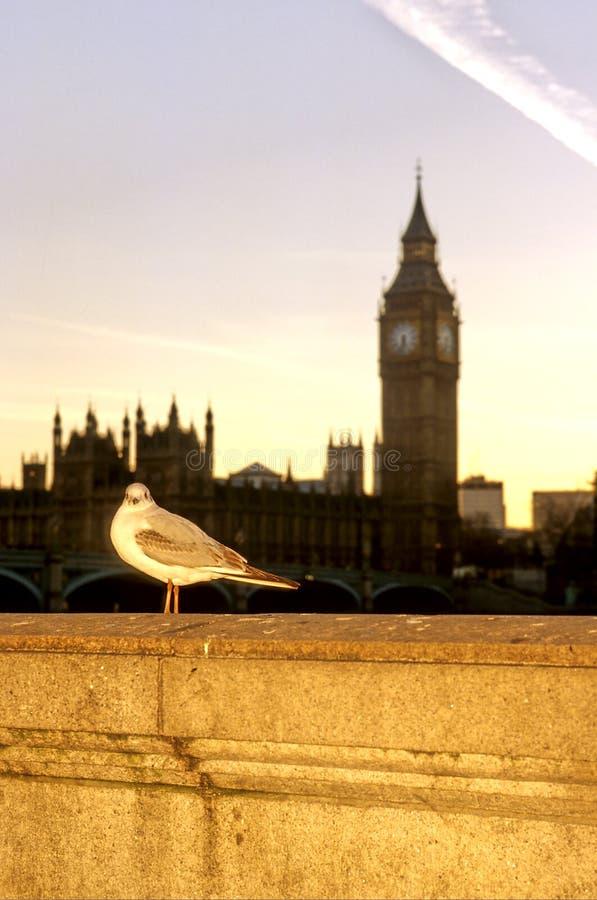 περιστέρι του Λονδίνου στοκ εικόνες