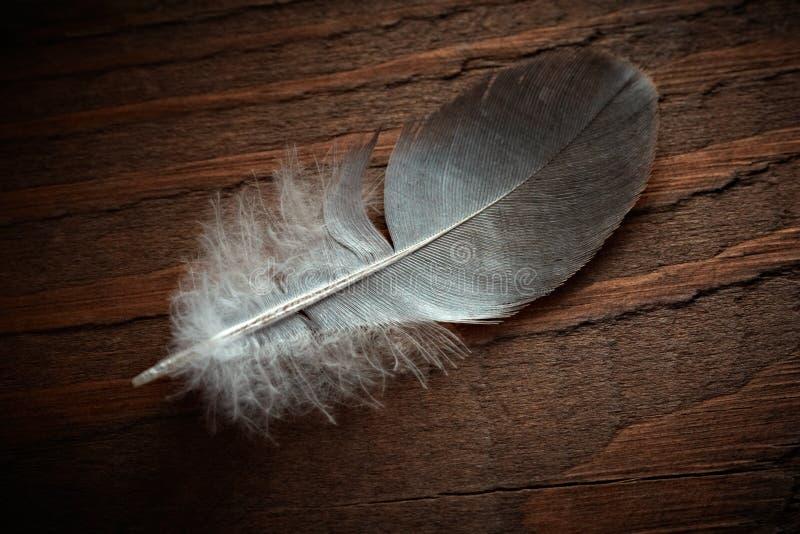περιστέρι φτερών στοκ φωτογραφία με δικαίωμα ελεύθερης χρήσης