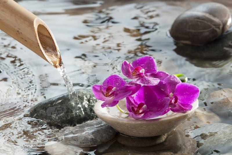 Περισυλλογή νερού για τη φυσική ομορφιά στοκ εικόνα με δικαίωμα ελεύθερης χρήσης