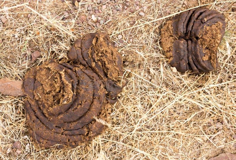 Περιττώματα αγελάδων στο έδαφος στοκ εικόνες