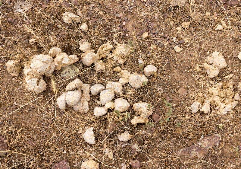 Περιττώματα αλόγων στο έδαφος στοκ εικόνες